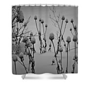 Snow Covered Coneflowers Shower Curtain