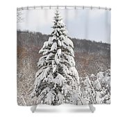 Snow Covered Spruce Shower Curtain