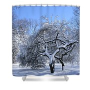 Snow-covered Sunlit Apple Trees Shower Curtain