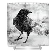 To Know A Crow Shower Curtain