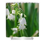 Snow Drop Lily Shower Curtain