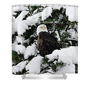 Snow Eagle Shower Curtain by Ronnie and Frances Howard