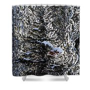 Snow Flocked Pines One Shower Curtain