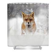 Snow Fox Series - Red Fox In A Blizzard Shower Curtain