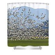 Snow Geese Exodus Shower Curtain