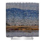 Snow Geese Landing Shower Curtain