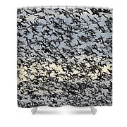 Snow Geese Spring Migration Shower Curtain