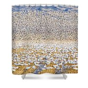 Snow Geese Take Off 1 Shower Curtain