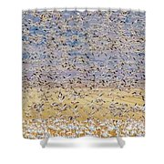 Snow Geese Take Off 3 Shower Curtain