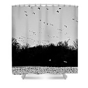 Snow Geese Winter Home In Delaware Shower Curtain