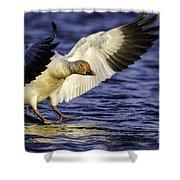 Snow Goose2 Shower Curtain