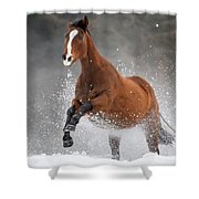 Snow Horse Shower Curtain