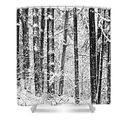 Snow In A Forest Shower Curtain