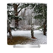 Snow In Pines Shower Curtain