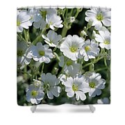 Snow In Summer Flowers Shower Curtain