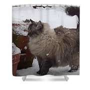 Snow Kitty Shower Curtain