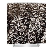 Snow-laden Forest Shower Curtain