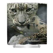 Snow Leopard 11 Shower Curtain