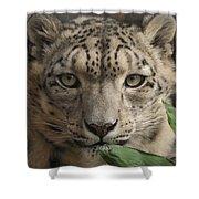 Snow Leopard 13 Shower Curtain