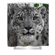 Snow Leopard 5 Posterized Shower Curtain