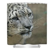 Snow Leopard 8 Shower Curtain