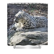 Snow-leopard Shower Curtain