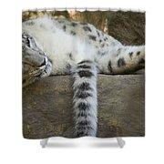 Snow Leopard Nap Shower Curtain