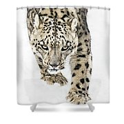 Snow Leopard On The Prowl X Shower Curtain