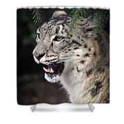 Snow Leopard Portrait Shower Curtain