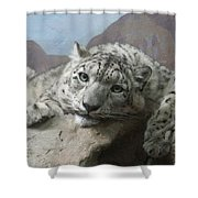 Snow Leopard Relaxing Shower Curtain