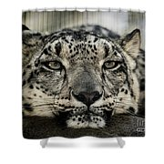 Snow Leopard Upclose Shower Curtain