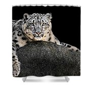 Snow Leopard Xxii Shower Curtain