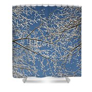 Snow Lined Limbs Shower Curtain