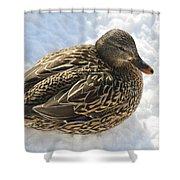 Snow Mallard Shower Curtain