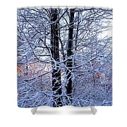 Snow Maple Morning Landscape Shower Curtain