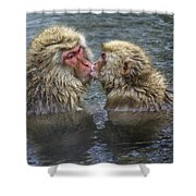 Snow Monkey Kisses Shower Curtain