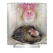 Snow Monkey Love Shower Curtain