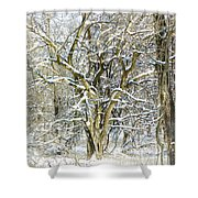 Snow On A Hedge Tree Shower Curtain
