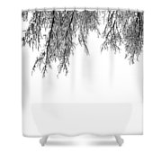 Snow On The Branches Two  Shower Curtain