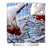 Snow On The Mountain Ash Shower Curtain