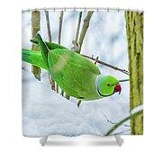 Snow Parrot Shower Curtain