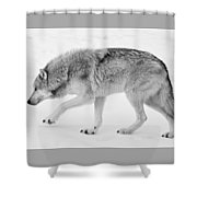 Snow Prowler Bw Shower Curtain