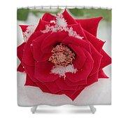 Snow Rose Shower Curtain