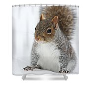 Snow Squirrel Shower Curtain