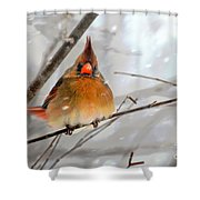 Snow Surprise Shower Curtain