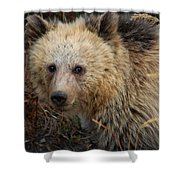 Snow The Grizzly Shower Curtain