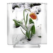 Snow Tulip Shower Curtain