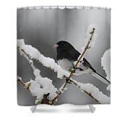 Snow Watcher Shower Curtain