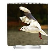 Snow White Seagull Shower Curtain