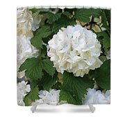 Snowball Tree With Delicate Leaves Shower Curtain